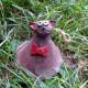 Zvonek kočka
